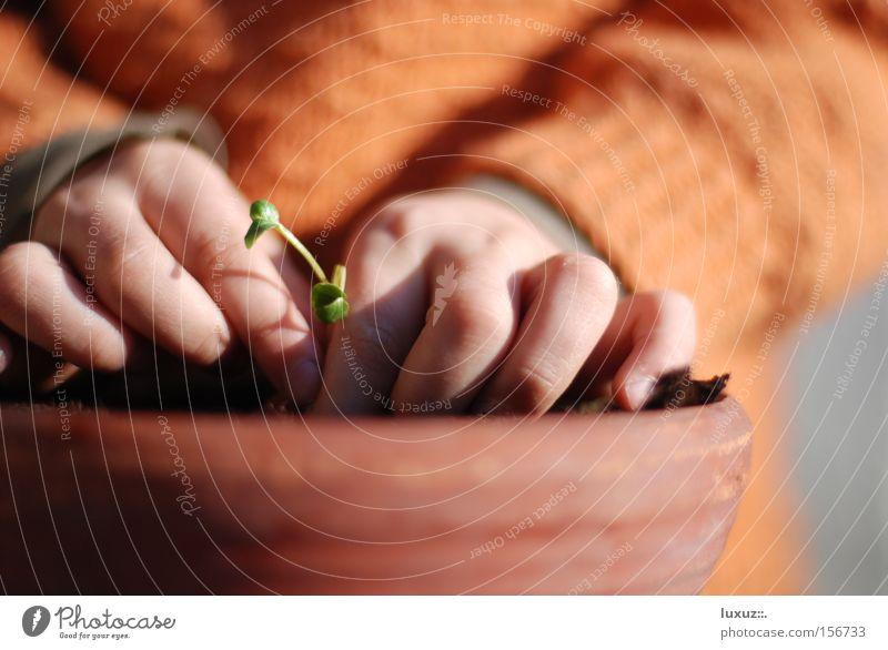 Plant Spring Healthy Sit Planning Vegetable Harvest Organic produce Ecological Profession Gardener Agriculture