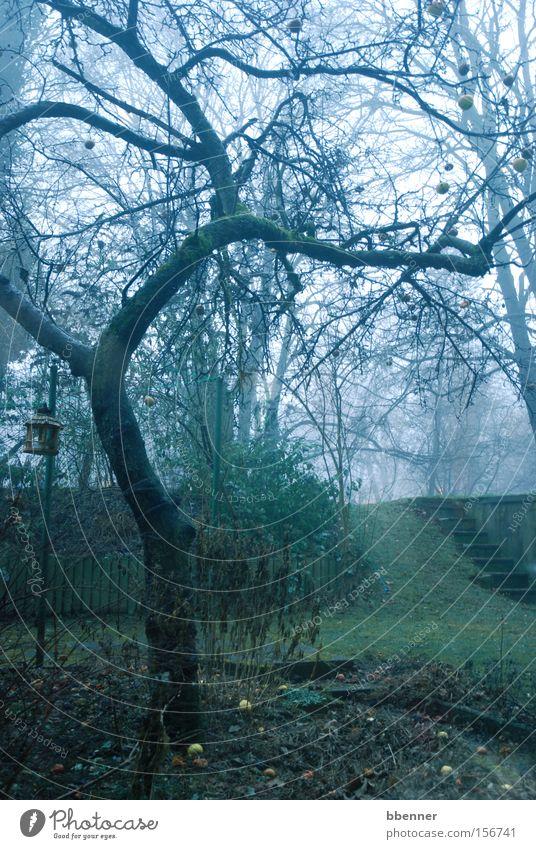 Old apple tree Tree Apple tree Headstrong Branch Garden Fog Green Gray Winter Lawn