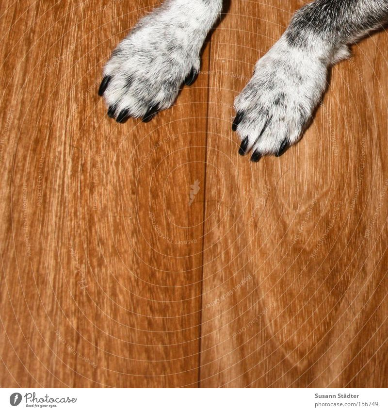 SEAT! Dog Pelt Animal Pet Paw Claw Feed Appetite Old Parquet floor Mammal Loyalty axel Seating manners