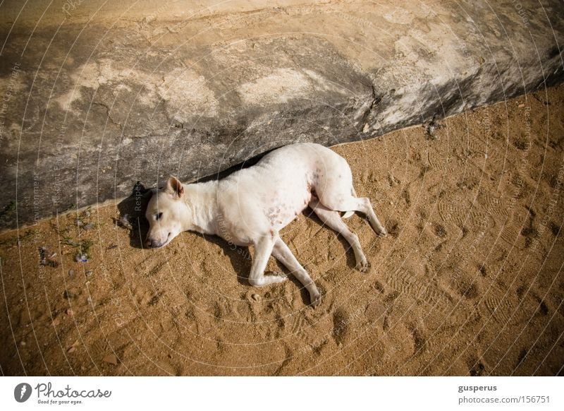 {lazy dog} Dog Sleep Beautiful Pelt Calm Peace Mammal Moral Comfortable sleep of the just nice silence Street dog