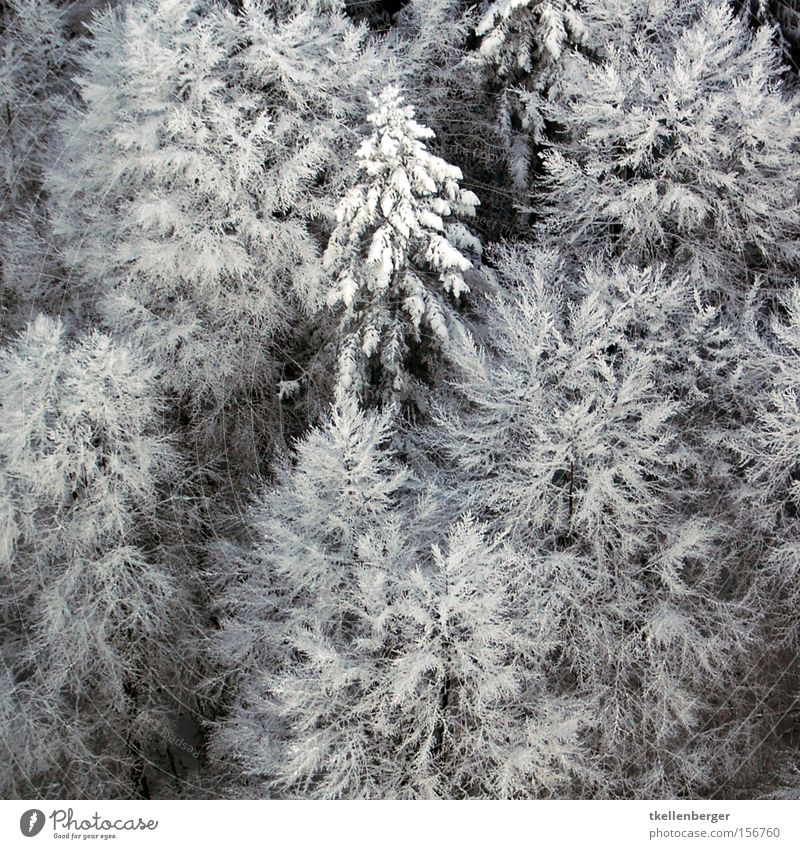 cotton ball Freedom Winter Snow Aviation Ice Frost Tree Absorbent cotton Flying Stress Fir tree Weight Burden Mother Holle Bird's-eye view