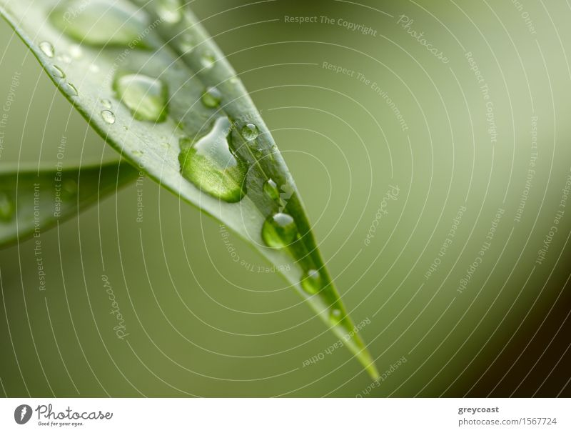 Green leaf with water droplets. Dzen background. Design Exotic Beautiful Life Harmonious Summer Garden Environment Nature Plant Rain Tree Grass Leaf Park Forest
