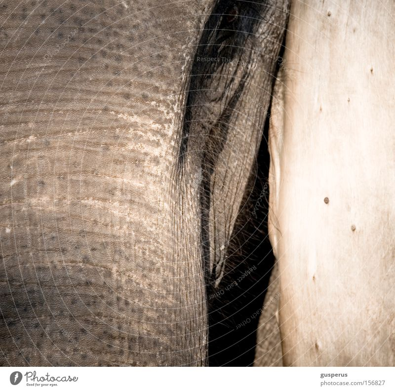 Eyes Skin Education Near Curiosity Wrinkles Trust Mammal Elephant Rough Be confident