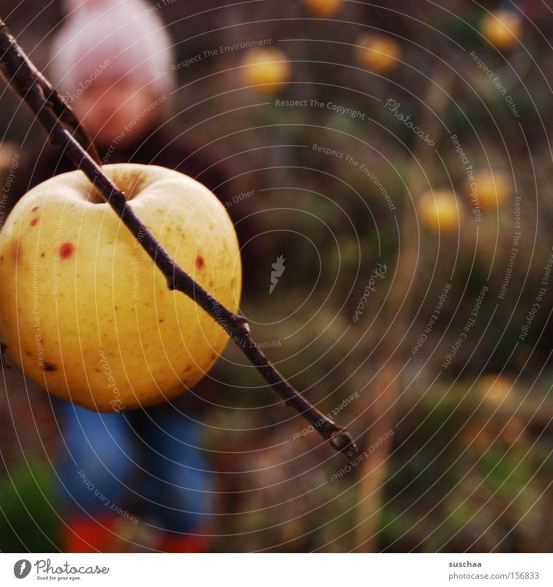 Child Girl Cold Autumn Fruit Branch Seasons Harvest Cap Apple Apple tree