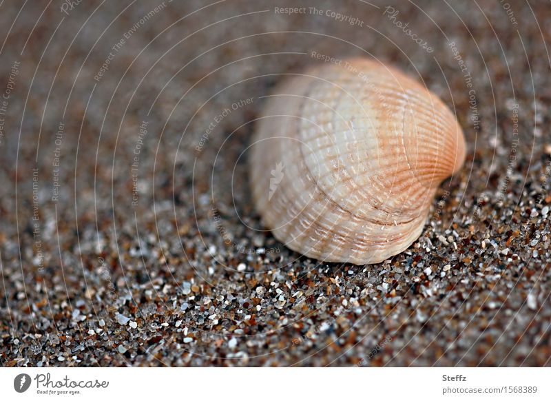 Nature Vacation & Travel Summer Beach Brown Sand Summer vacation Sandy beach Mussel Vacation mood Grain of sand Mussel shell Cockle Sea mussel