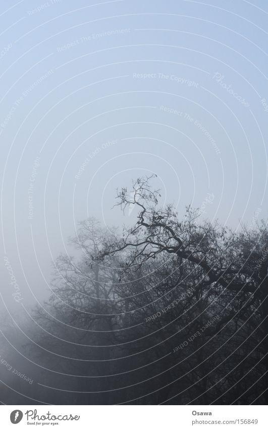 fog crown Fog Tree Treetop Branch Twig Wood Bleak Winter Sky Covered Dark Haze Silhouette Bizarre Grief Distress