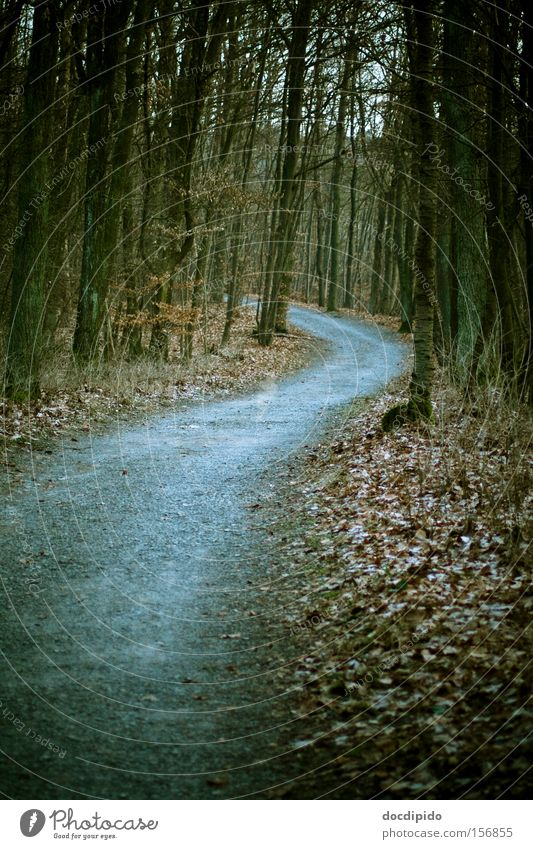 The way Winter Hiking Nature Landscape Plant Earth Autumn Bad weather Tree Leaf Wild plant Forest Lanes & trails Movement Think Freeze Going Dream Sadness Faded