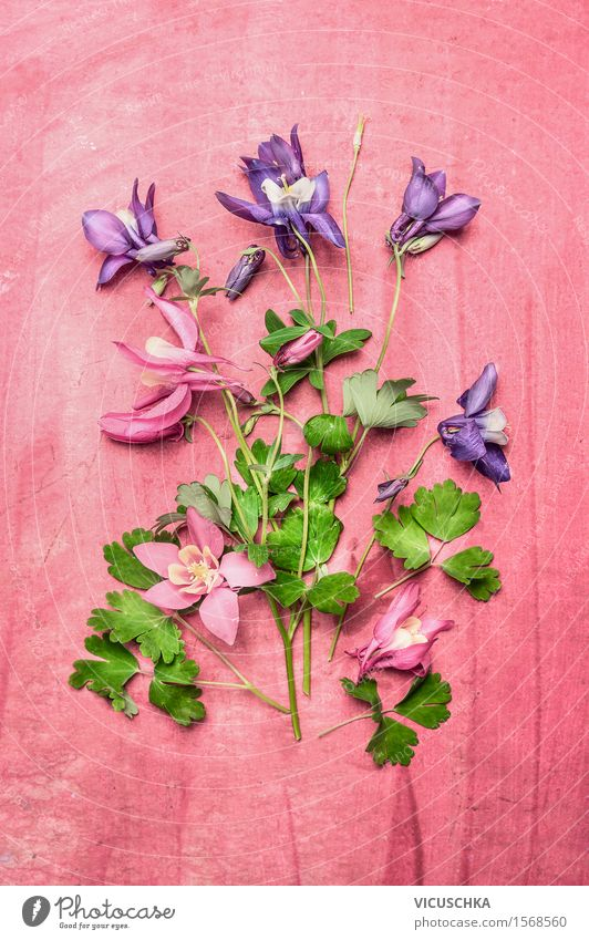 Garden flowers on pink Shabby Chic background Style Design Living or residing Decoration Table Nature Plant Flower Leaf Blossom Aquilegia Part of the plant