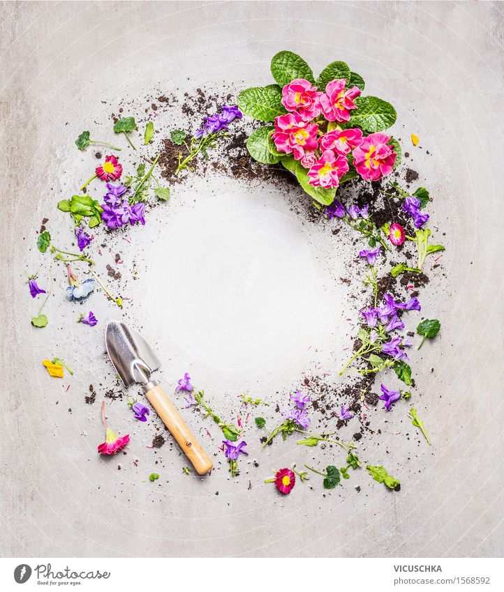 Round frames with shovel and garden flowers Design Summer Living or residing Garden Decoration Table Nature Plant Spring Flower Leaf Blossom Blossoming Style