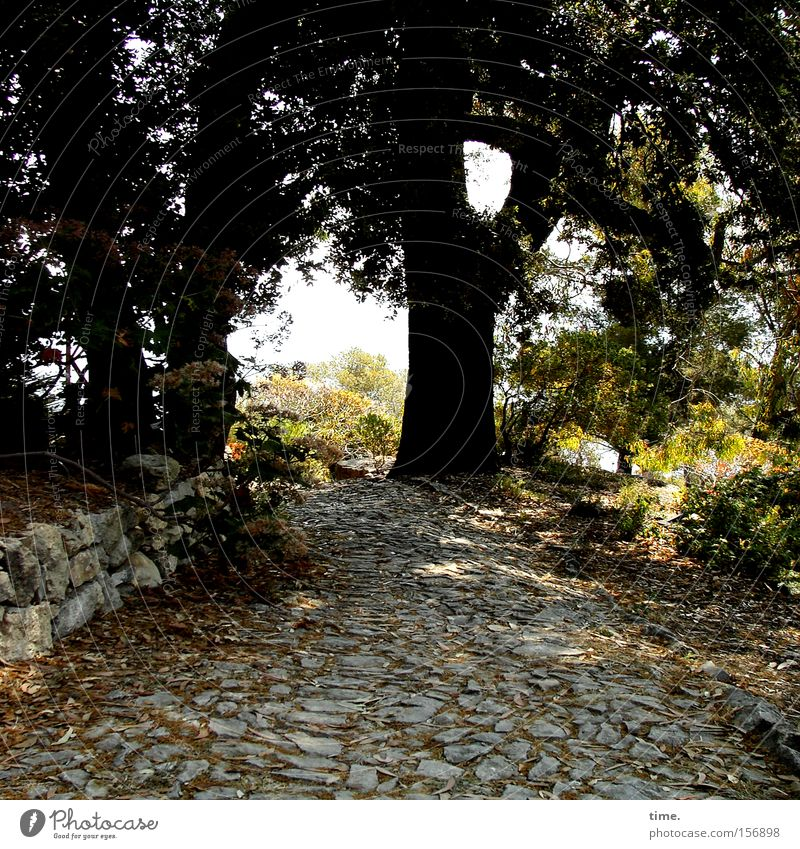 Nature Tree Calm Relaxation Wall (building) Garden Stone Wall (barrier) Lanes & trails Park Power Protection Traffic infrastructure Paving stone Natural stone
