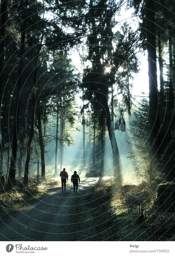 two persons walking in the forest in sunlight Colour photo Exterior shot Day Light Shadow Silhouette Sunlight Sunbeam Back-light Joy Leisure and hobbies Hiking