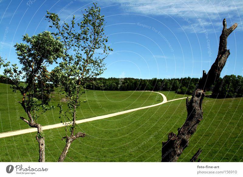 Landscape Sky Tree Green Blue Leaf Street Grass Clarity Enthusiasm