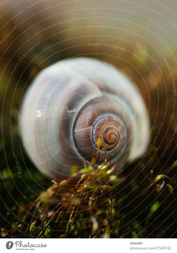 Nature Plant Summer Landscape Leaf Animal Autumn Spring Grass Moody Bushes Delicate Moss Snail Fern Snail shell