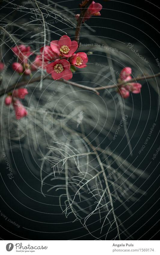 Plant Blue White Blossom Pink Fern