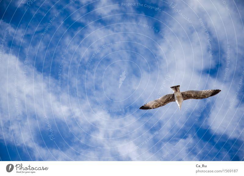 Free flight Sky Clouds Animal Wild animal Bird Wing 1 Esthetic Authentic Elegant Tall Beautiful Maritime Speed Blue Gray Black White Emotions Moody Happy