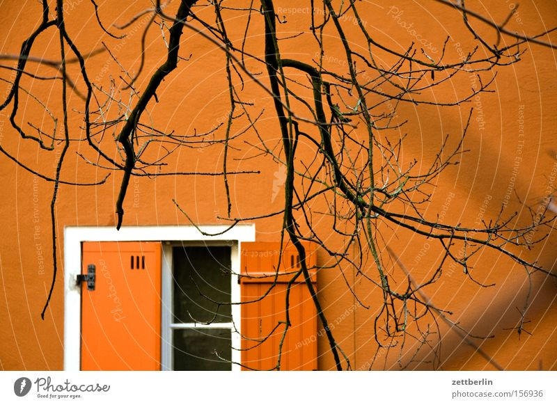 ink fountain House (Residential Structure) Facade Window Shutter Above Open Half Tree Branch Twig Winter Spring Bleak Stalking Detail