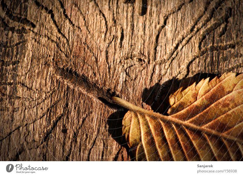 Old Leaf Autumn Wood Brown Park Tree trunk Beetle Damage Worm Bark-beetle