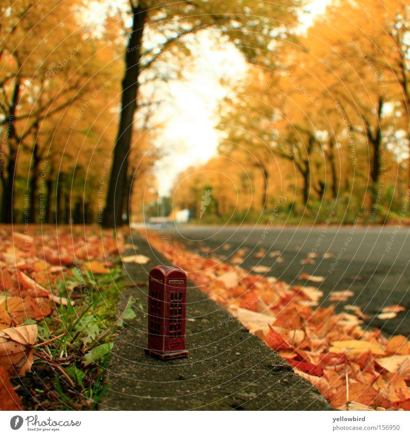 Tree Leaf Street Autumn Lanes & trails Telephone Telecommunications Traffic infrastructure Footpath Phone box