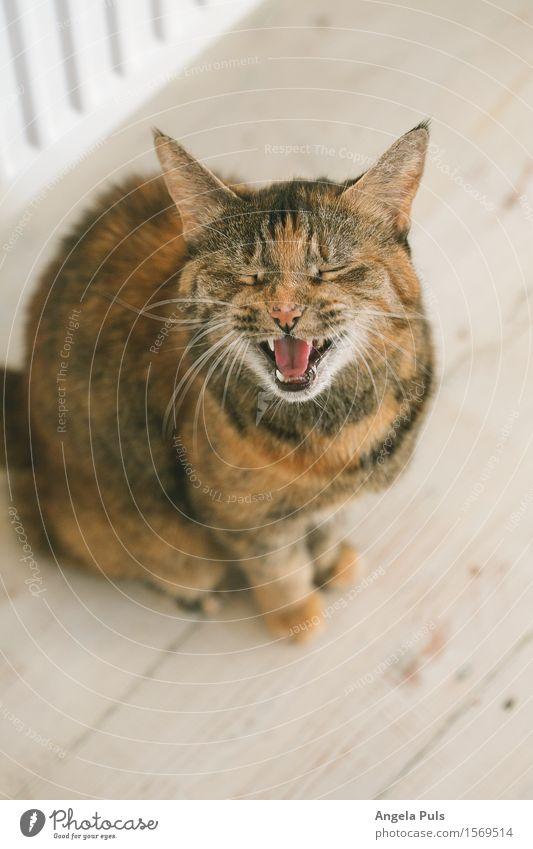 Cat White Animal Life To talk Brown Cute Appetite Pet Thirst Original Voracious