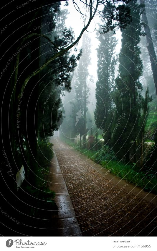 Nature Green Tree Calm Forest Lanes & trails Brown Fog Monastery Physique Cypress Hermitage