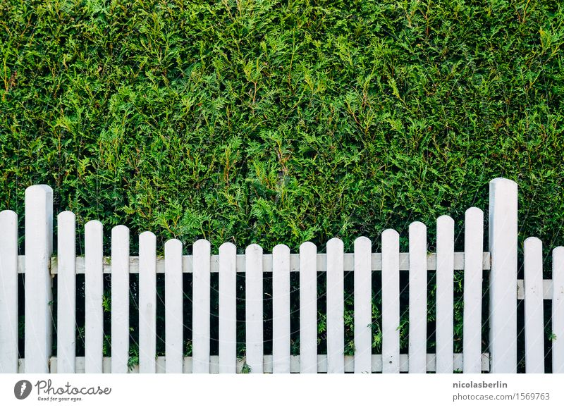 Town Green White Loneliness Style Wood Garden Design Flat (apartment) Living or residing Fear Elegant Dangerous Simple Threat Protection