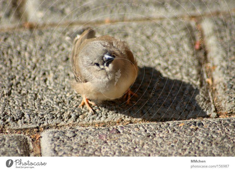 Animal Bird Cobblestones Beak Paving stone Orientation Sparrow Poultry