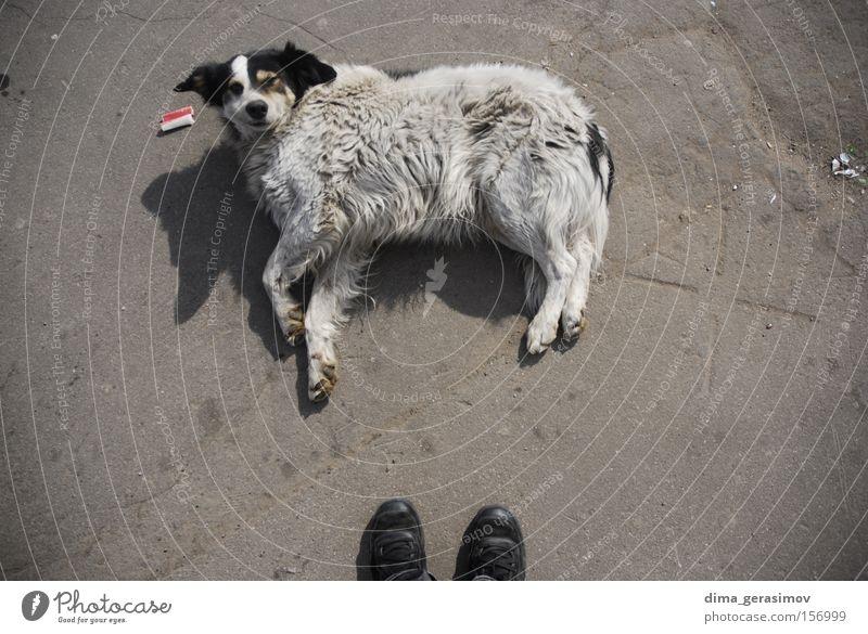 Dog Sneakers Asphalt Mammal Street dog Goof off Wake Disturbance Disruptive element Lie Exterior shot Colour photo Watchdog Crossbreed