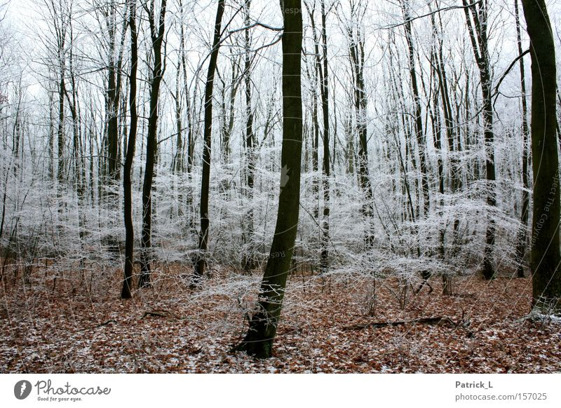 Dream Forest Ice Bright Dark Desire Fairy tale Contentment Curiosity Hope Black White Leaf Winter Germany Snow