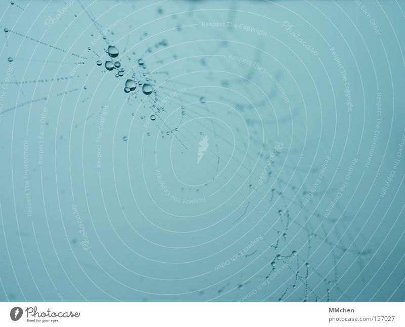Autumn Fog Drops of water Network Dew Spider Muddled Spider's web Spin