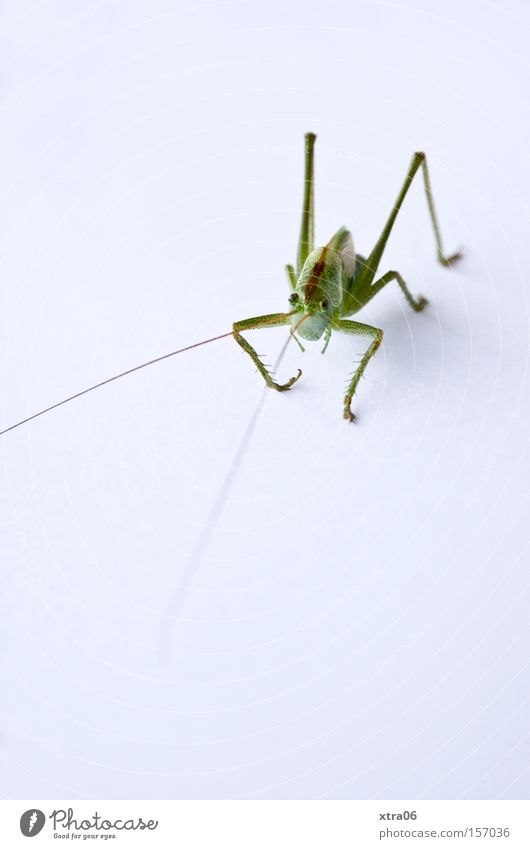 Green Insect Living thing Feeler Salto Acrobatics House cricket