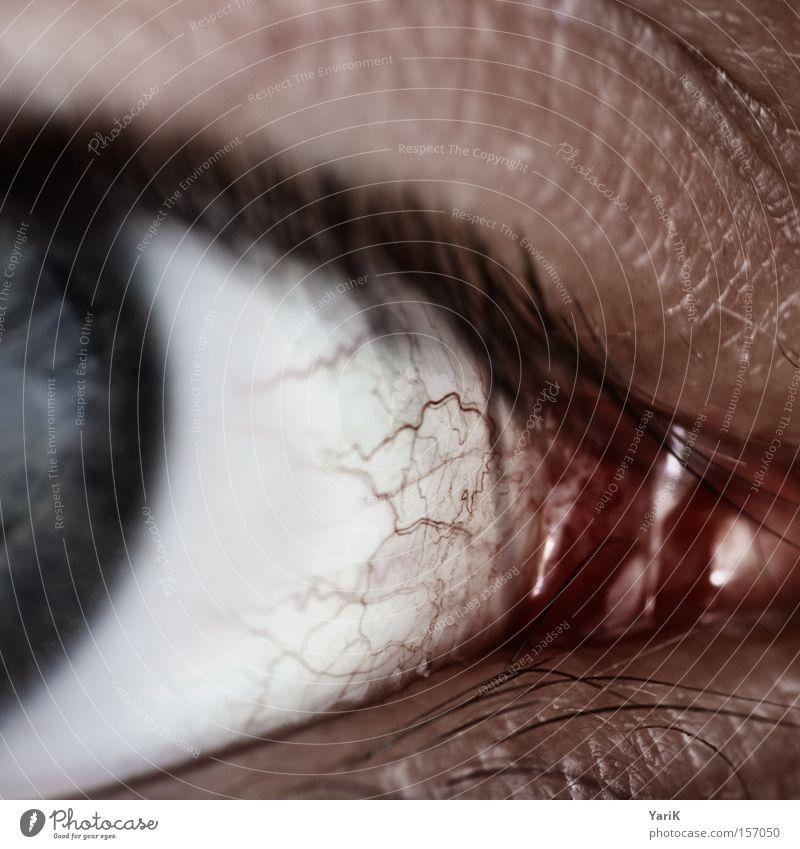 White Blue Red Eyes Macro (Extreme close-up) Near Eyelash Vessel Pupil Iris