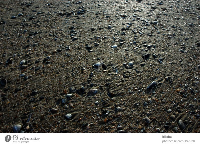 Beautiful Ocean Beach Sadness Sand Coast Glittering Background picture Grief Multiple Ground Distress Many Mussel Treasure Low tide