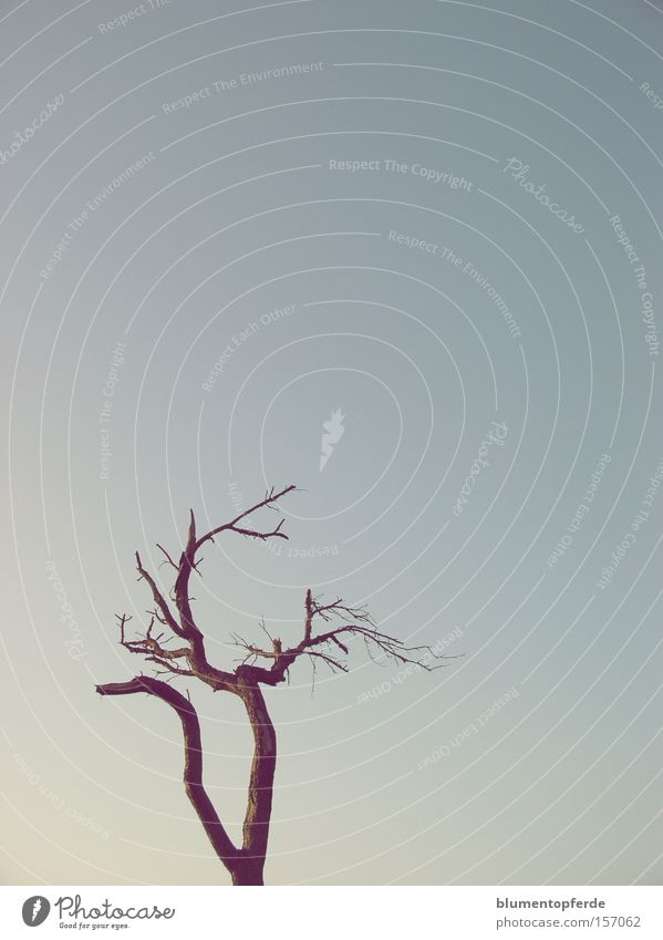 Sky Tree Blue Winter Loneliness Wood Branch