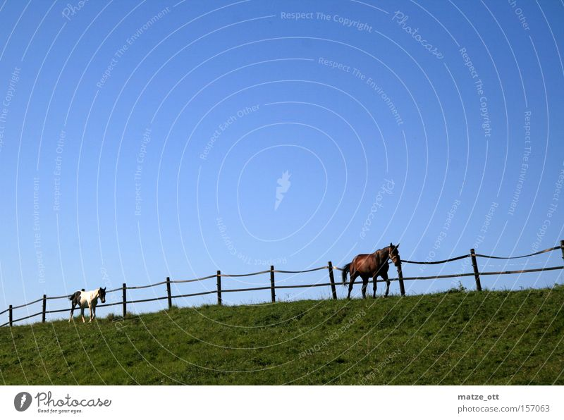 ride Horse Pasture Pasture fence Ride Animal Nature Lawn Grass Sky Blue Green Mammal Summer