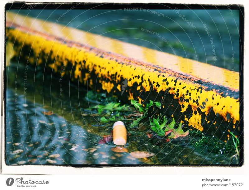 town Cigarette Rain Water Yellow Plantlet Puddle Street Rhine Duesseldorf Cigarette Butt