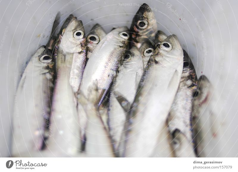 Dead fish Fish Winter Death Snow Ice Eyes Blue White Mouth Ocean Estonia Tallinn Water Cold