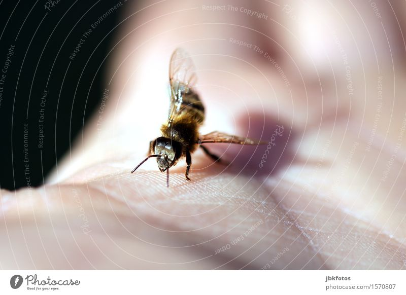 wagging dance Environment Nature Climate Climate change Beautiful weather Animal Pet Farm animal Bee Animal face Wing Honey bee 1 Flock Esthetic Athletic
