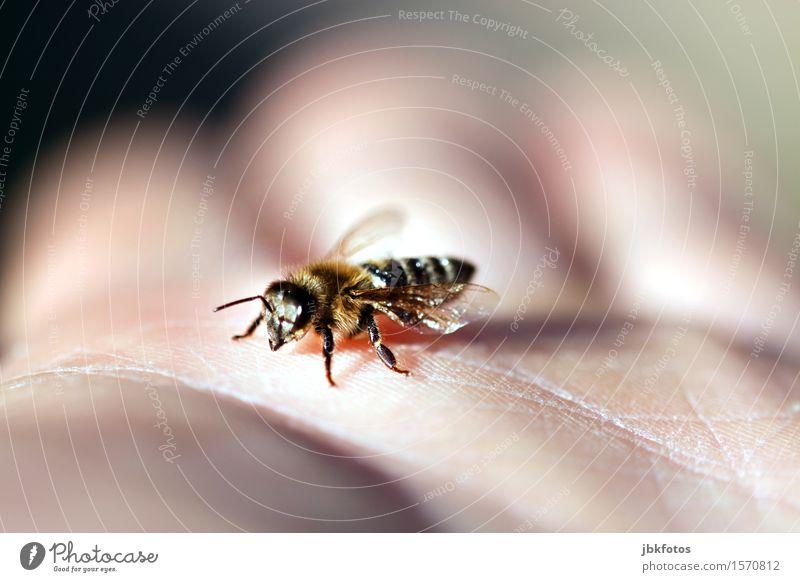 spring fever Food Dessert Honey Nutrition Breakfast Environment Nature Landscape Beautiful weather Animal Pet Farm animal Bee Honey bee 1 Esthetic Athletic