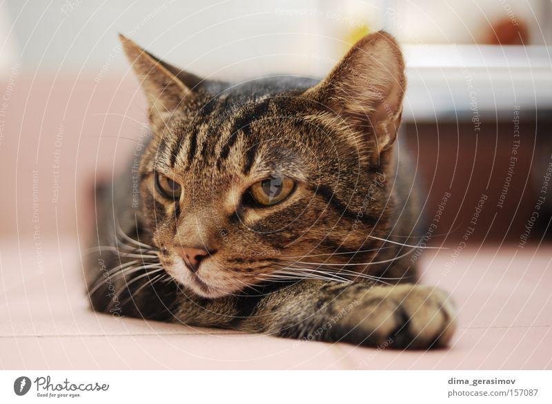 Cat Animal Eyes Ear Sense of hearing Nose Dye Bedroom Mammal Bathroom Colour pose Interior shot