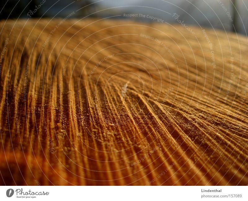 surface of wood Wood Surface Tree trunk Saw Structures and shapes Furrow Cross-section