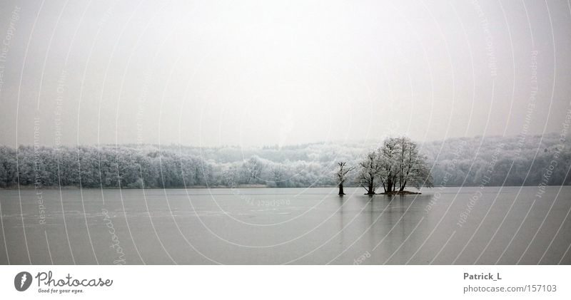 exiled Ice Tree Lake Bright Dark Calm Comforting White Snow Dream Far-off places Old Loneliness Trust Winter Germany