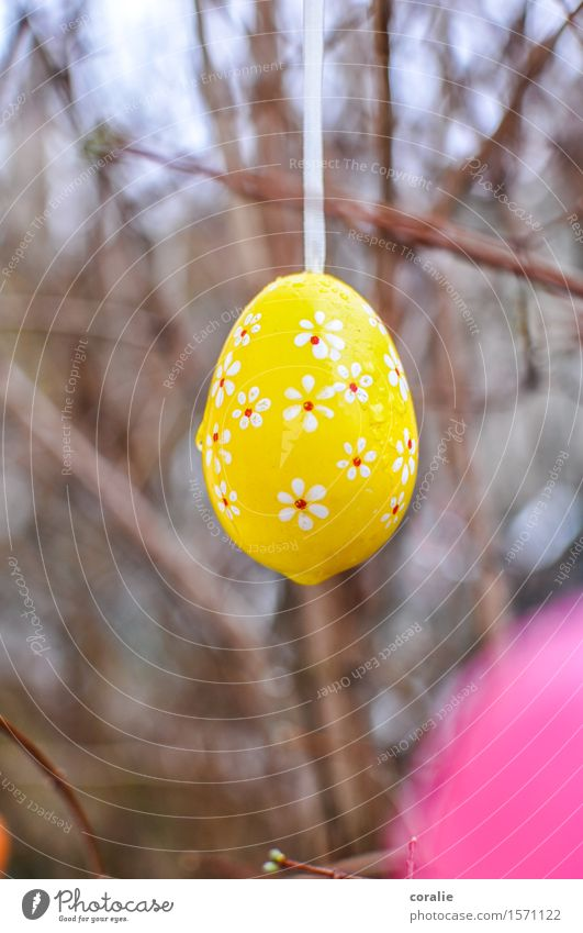 Happy egg searching Drops of water Garden Wet Cute Easter Easter egg Floral Yellow Spring April March Easter Monday Easter gift Bushes Multicoloured Dripping