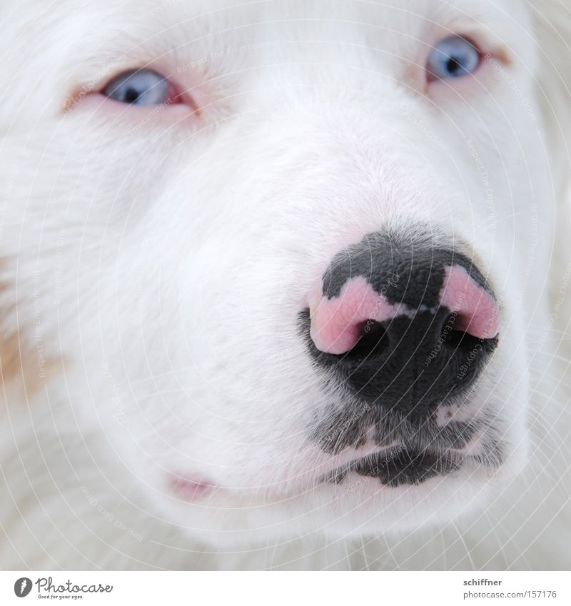 Dog Black Pink Fear Nose Pelt Mammal Snout Timidity Dappled Speckled Animal Feed Gaze