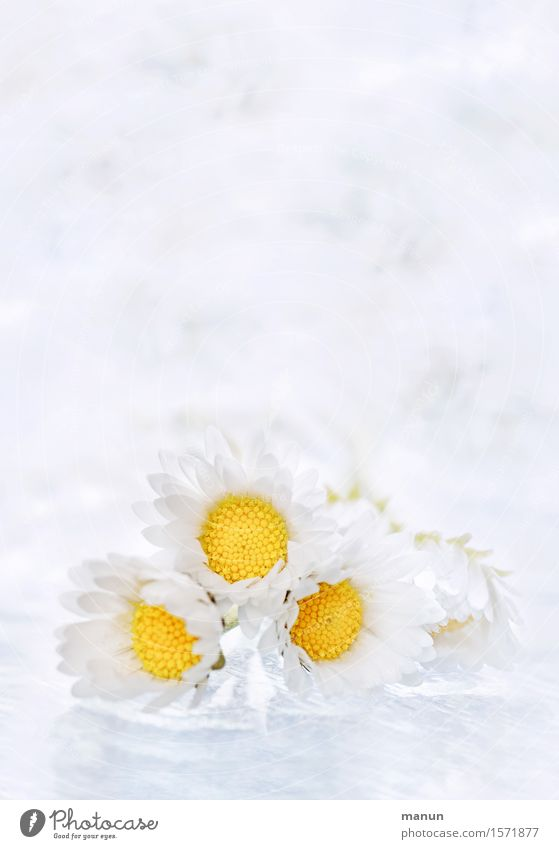 a bunch of flowers Cosmetics Healthy Health care Alternative medicine Decoration Bouquet Nature Plant Spring Summer Flower Blossom Daisy Bright Beautiful Small
