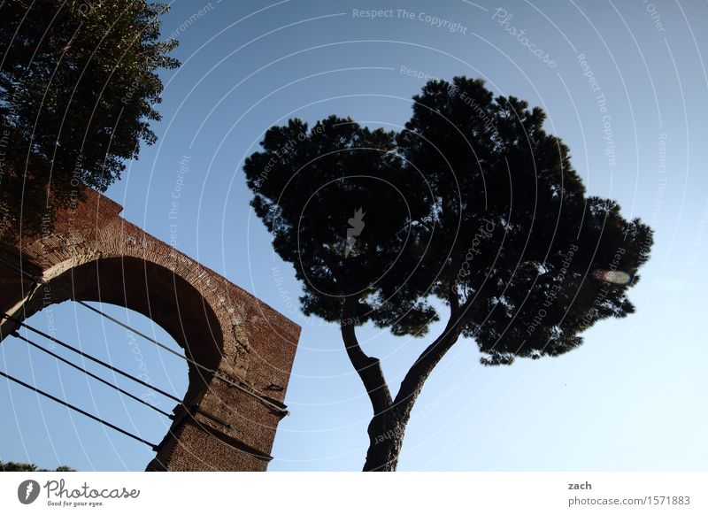 under the pines Vacation & Travel Nature Sky Clouds Plant Tree Stone pine Tree trunk Rome Italy Town Capital city Old town Places Gate Door Historic