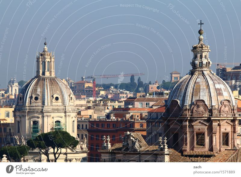 Over the rooftops of Rome Vacation & Travel Sightseeing City trip Sky Tree Stone pine Italy Town Capital city Downtown Old town House (Residential Structure)