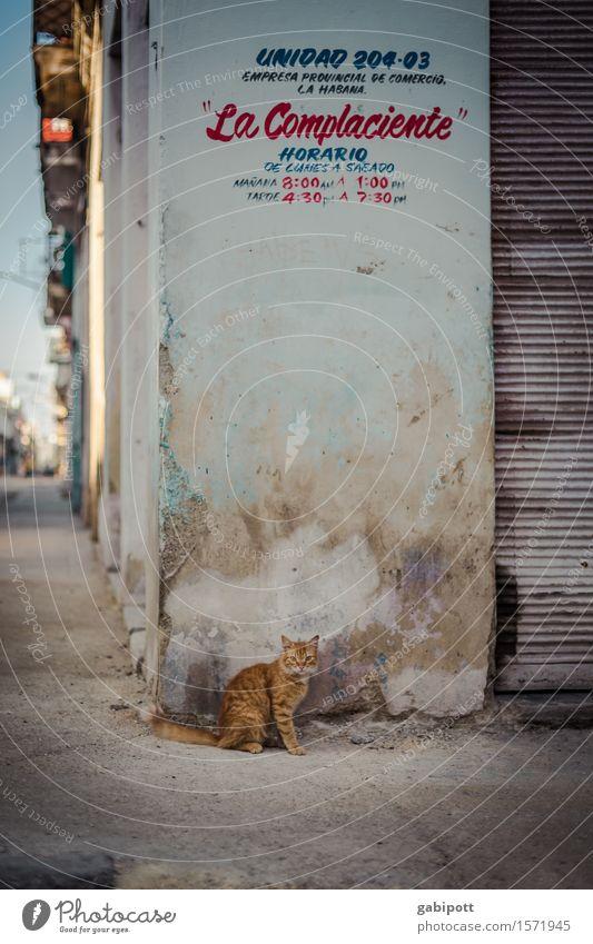 Cuban cat Havana Town Capital city Downtown Wall (barrier) Wall (building) Facade Animal Pet Farm animal Wild animal Cat 1 Trashy Gloomy Multicoloured Culture