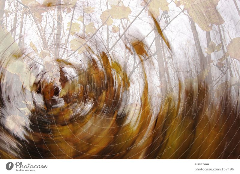 Nature Tree Leaf Forest Cold Autumn Warmth Brown Round Branch Transience Gale Rotation Swirl Tone-on-tone