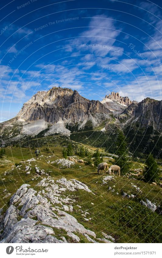 Dolomite idyll with sheep Vacation & Travel Tourism Trip Far-off places Freedom Mountain Hiking Environment Nature Landscape Plant Summer Beautiful weather