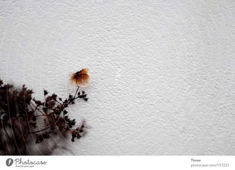 Flower Plant Loneliness Garden Wall (barrier) Park Timidity Decent Withdraw Shadowy existence